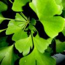 Afrodisíacos naturais: as ervas do sexo